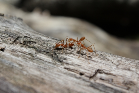 Ants on log Stock Photo
