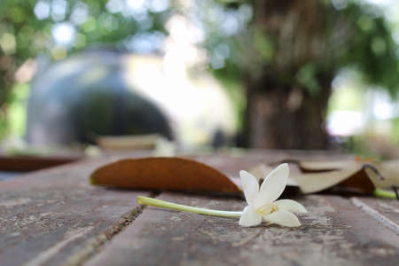 White plumeria on wooden table