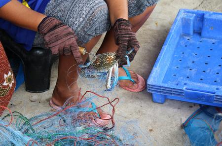 uitpakken: Fisherman unpack crab from trawl.