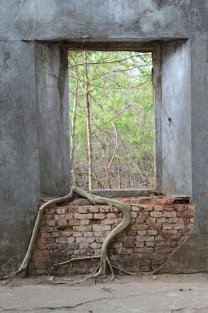 古いれんが造りの壁に木にルート。