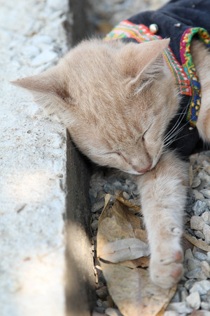Red cat sleeping on the ground stone. Stock Photo