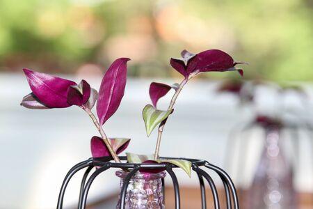 tranquillity: Puplel flower in a glass vase.
