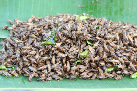 Fried crickets for sale