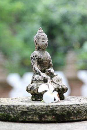 Buddha statue and Leelawadee flower on the stone.