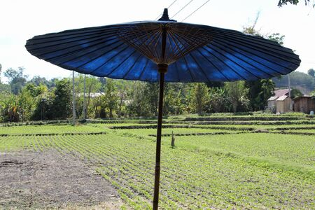 A large blue umbrella stand with backdrop is rice fields.