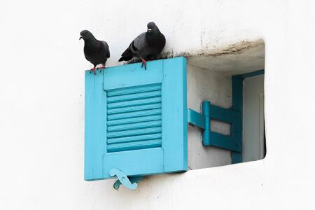 Open blue louver window with 2 pigeons on white concrete  wall. 写真素材