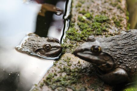 Frogs live beside the pond. 写真素材