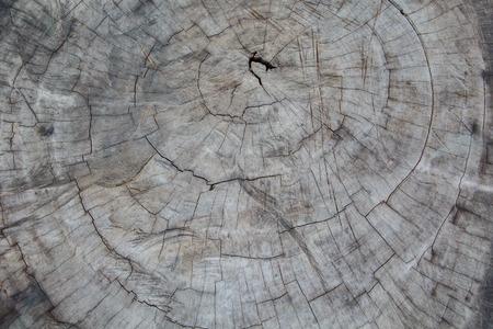 Old tree stump closeup texture background pattern. Stock Photo