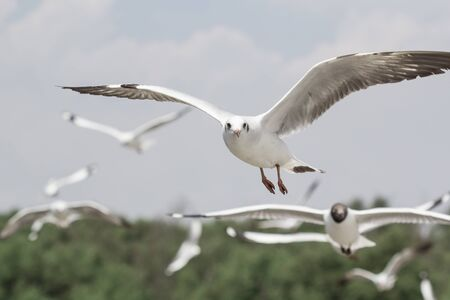 Seagulls flying high with wide spread wings towards light against a white sky, inspirational concept of freedom and aspiration Banco de Imagens