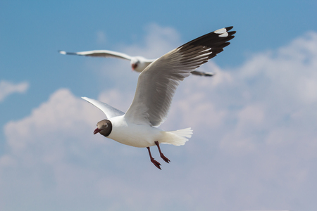 Seagulls flying high with wide spread wings towards light against a blue sky, inspirational concept of freedom and aspiration