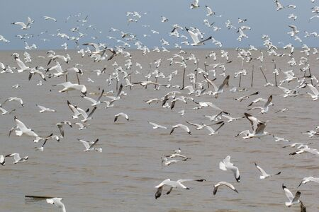 The flock of seagulls flying near the sea