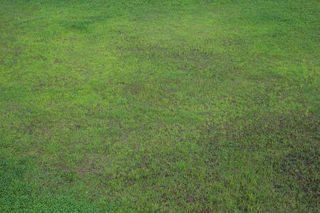 Top View Green grass background texture.