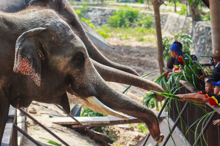 Chonburi, Thailand - MARCH. 12th 2017: tourists and children entering the Feeding the elephant at khao Khiao Zoo.