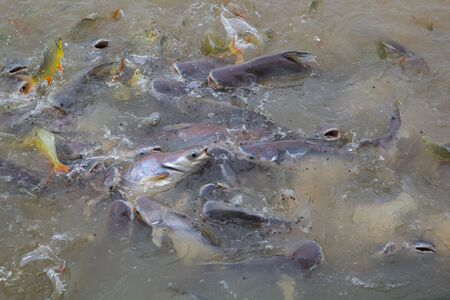 Many Fishes Scramble For Food, competition concept, concept for help