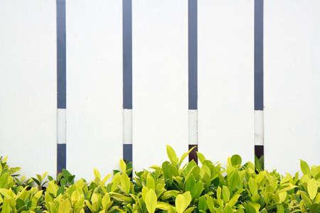 cerca blanca: Valla blanca y la hierba verde
