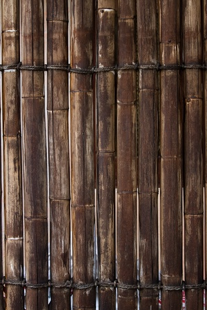 bamboo fence photo