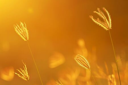 Meadow grass under the golden sunlight. photo