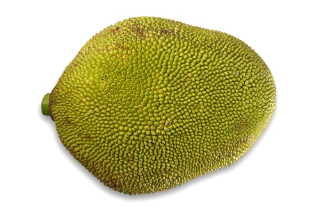Giant jackfruit of South East Asia photo