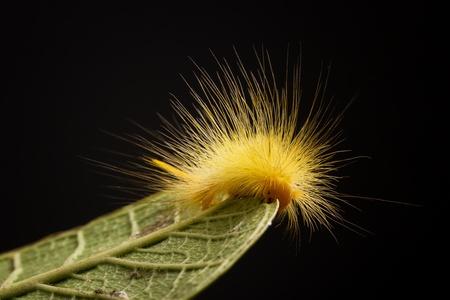 Caterpillar against black background photo