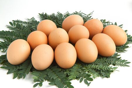 Eggs on the leaves. Stock Photo - 11516396