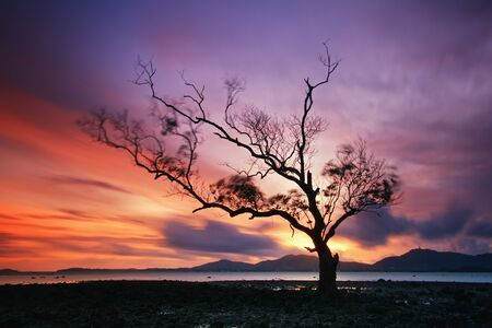 Lonely tree by the sea and sunset, Thailand photo