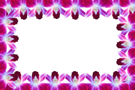 Orchids flower frame photo