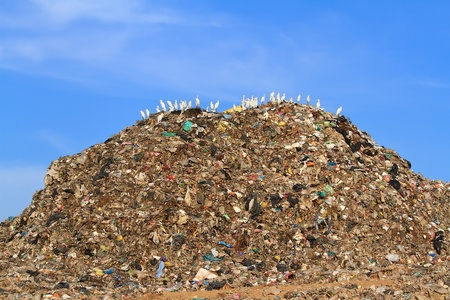 dump yard: Bird on mountain of garbage