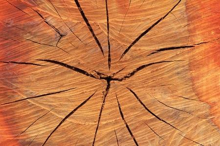 texture of tree stump Stock Photo - 12161669