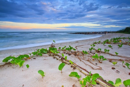 Morning glory beach in cha-am,  Thailand  photo