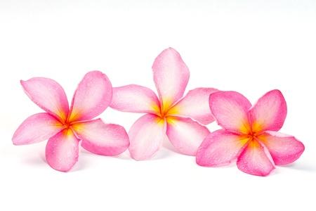 hawaiana: Flor de Frangipani aislado en blanco