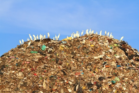 Bird on mountain of garbage photo
