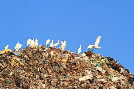 Bird on mountain of garbage Stock Photo - 12663194