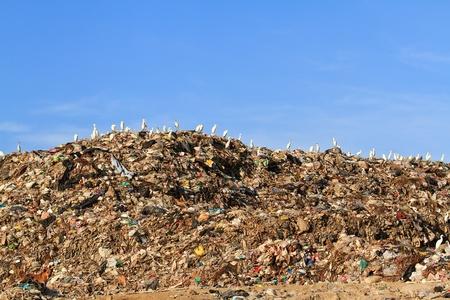 Bird on mountain of garbage Stock Photo - 12663198