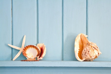 decoration with shell and fish, beach style decoration photo