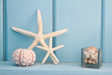 decoration with shellfish, beach style decoration photo