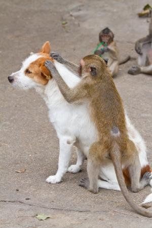 Monkeys controllo per pulci e zecche nel cane
