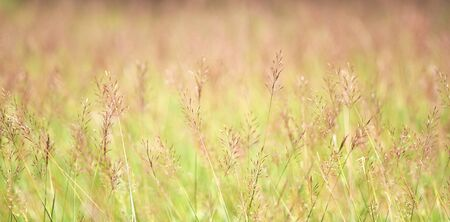 Spring or summer abstract nature background with grass  photo