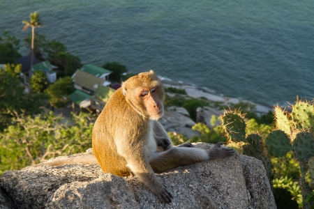 Monkeys on the mountain. photo