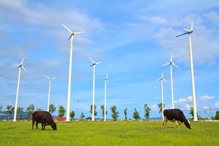 Wind turbine - renewable energy source with two Dairy cows photo