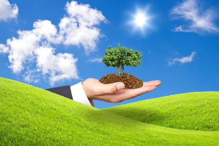 ble: tree plant  in hand  on green grass and ble sky Stock Photo