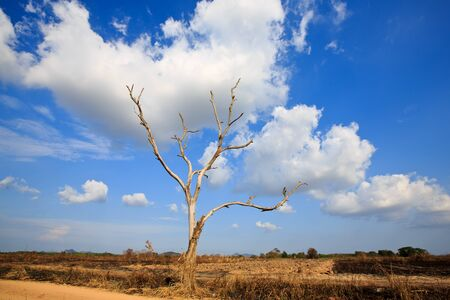 arbre mort: arbre mort sous le beau ciel
