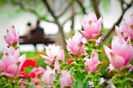 Garden of love,Thailand Stock Photo