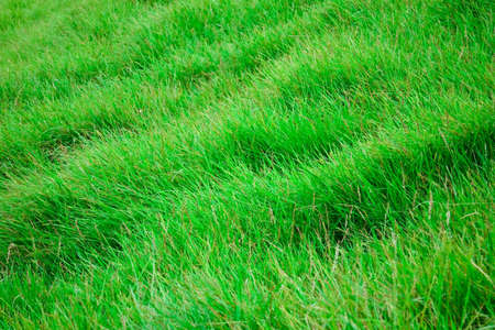 View of grass 2 photo