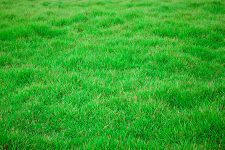 View of grass 1 photo