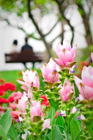 Garden of love.(v),Thailand