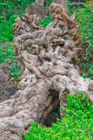 Terrible huge root in a forest of Thailand