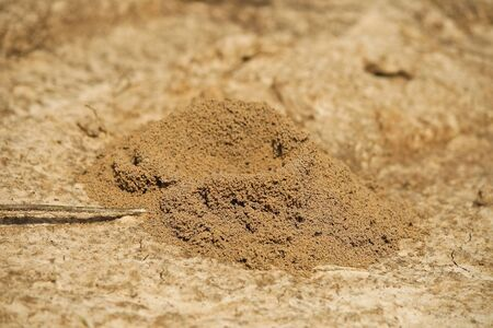 Ant s nest made from soil on the ground  photo