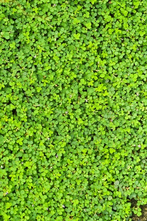 Small green leaves Stock Photo - 17592361