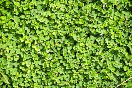 Small green leaves Stock Photo - 17592357