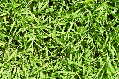 Small green leaves Stock Photo - 17592359